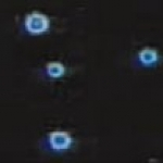 Les minuscules flammes en boule qui se forment en microgravité sont difficiles à voir. Celles-ci ont été filmées dans le noir par une caméra vidéo hyper sensible à bord de la navette Columbia en 1997