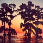 Ces cyprès de Louisiane poussaient jadis sur la terre ferme, mais celle-ci a été submergée