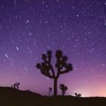Perséide surprise le 11 août 2007 au dessus d'un arbre de Josué du Joshua Tree National Park, en Californie.