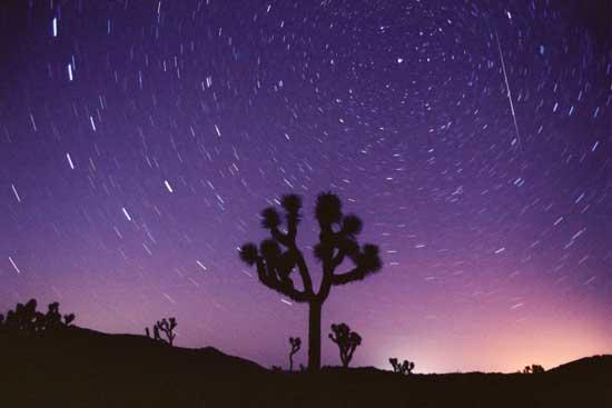 Perséide surprise le 11 août 2007 au dessus d\'un arbre de Josué du Joshua Tree National Park, en Californie.