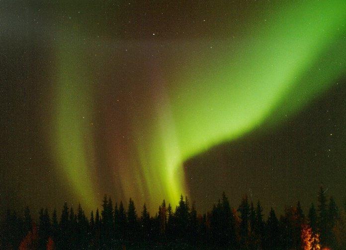 Une aurore boréale composée de lumière rouge et verte, observée au-dessus de la silhouette de sapins. Le phénomène, qui parait tout proche, se produit en fait à une altitude d\'une centaine de kilomètres